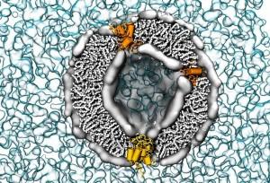 Cell membrane (Image: GRK 1962)