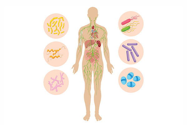 Important messenger substances in the immune system › Friedrich ...