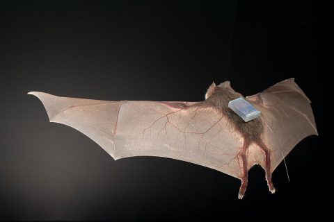 Bat with tracking sensor.