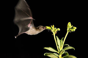 Bat and flower