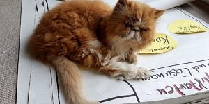 Homeoffice, Cat