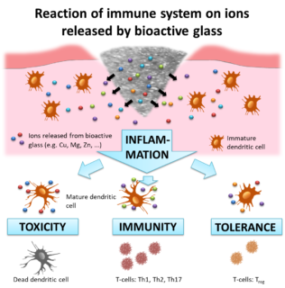 "Towards entry ""How does bioactive glass influence immune cells?"""