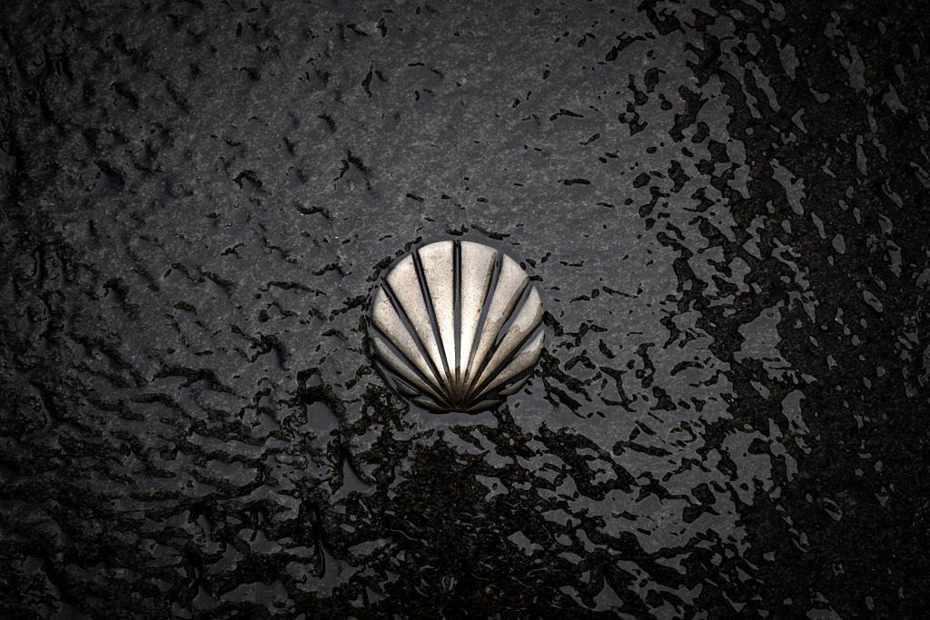A shell on black backround